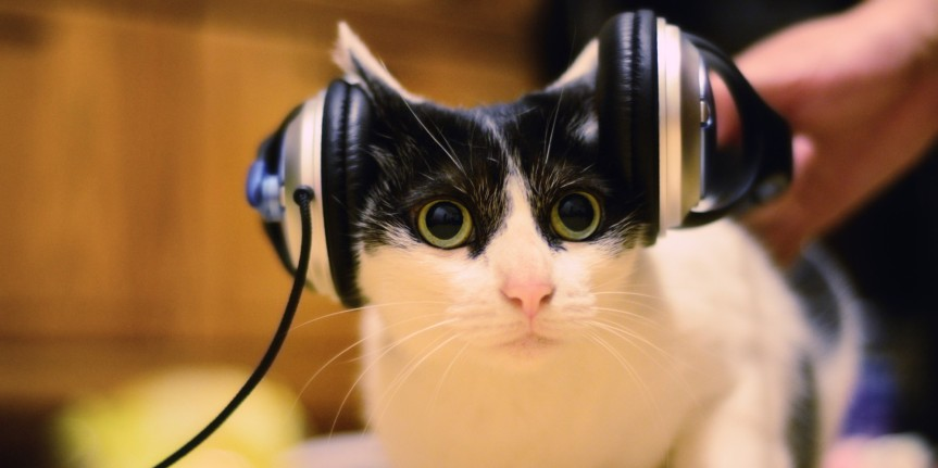 o-CAT-LISTENING-MUSIC-facebook
